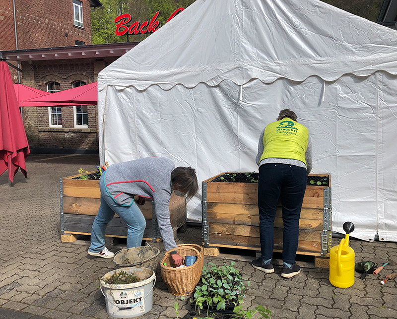 Bepflanzung von Hochbeeten für die Essbare Stadt Bergisch Gladbach